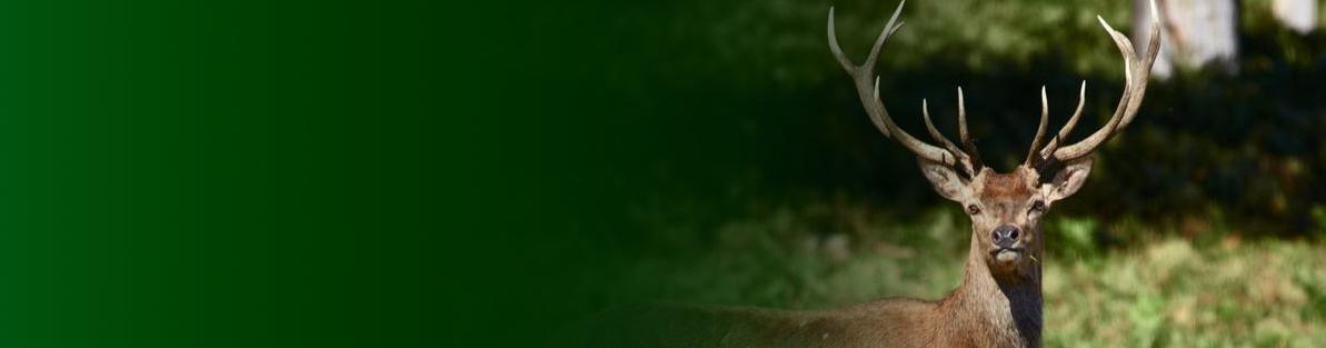 Fleesensee – Die Jagdschule